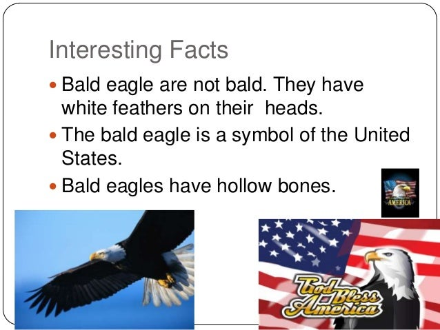 a report on interesting facts