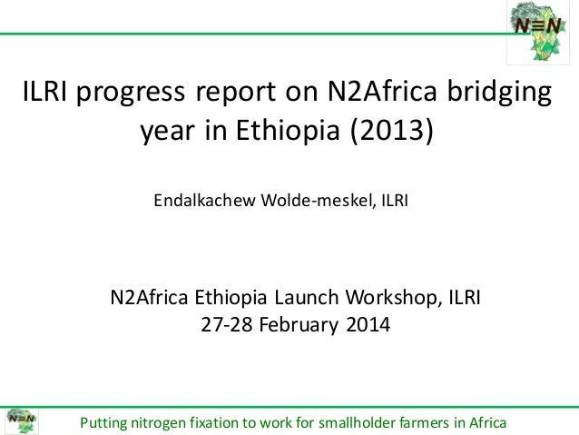 በሀዋሳ ዩኒቨርሰቲ የም ጋር በመተ HAWASSA UN DIRECTOR ILRI progress report on N2Africa bridging year in Ethiopia (2013) Putting nitrog...