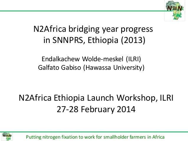 በሀዋሳ ዩኒቨርሰቲ የም ጋር በመተ HAWASSA UN DIRECTOR N2Africa bridging year progress in SNNPRS, Ethiopia (2013) Putting nitrogen fixa...