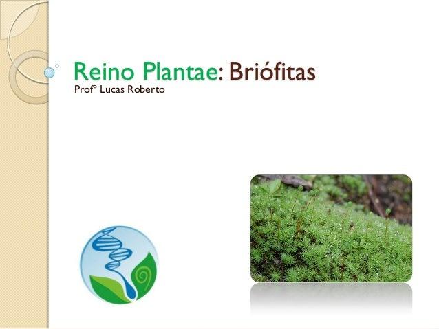 Reino Plantae: Briófitas Profº Lucas Roberto