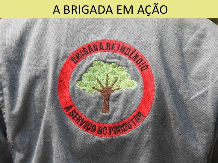 Brigada de Incêndio - Aliança da Terra - 2010