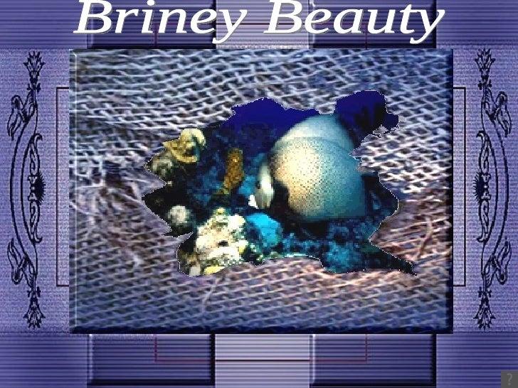 Briney Beauty