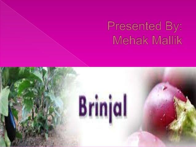  Botanical name : Solanum melongena  Family : Solanaceae
