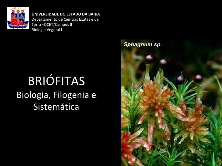 UNIVERSIDADE DO ESTADO DA BAHIA Departamento de Ciências Exatas e da Terra –DCET/Campus II Biologia Vegetal I BRIÓFITAS Bi...
