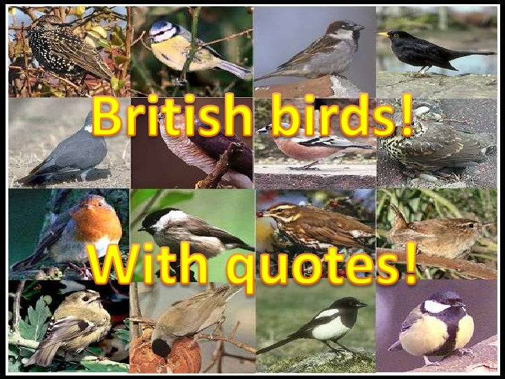British birds! <br />With quotes!<br />