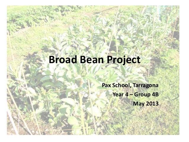 Broad Bean ProjectPax School, TarragonaYear 4 – Group 4BMay 2013