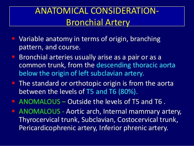 Branches of aorta anatomy
