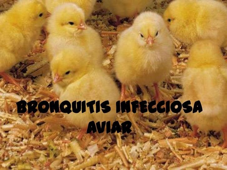 BRONQUITIS INFECCIOSA AVIAR <br />