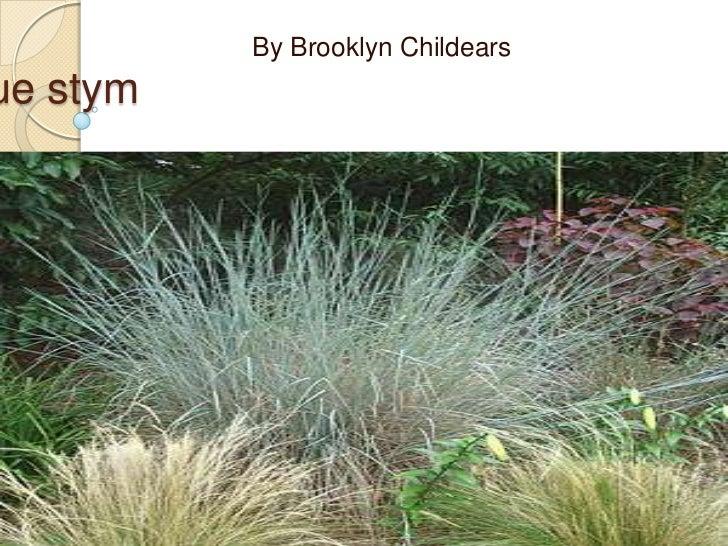 By Brooklyn Childearsue stym