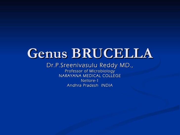 Genus BRUCELLA  Dr.P.Sreenivasulu Reddy MD.,        Professor of Microbiology      NARAYANA MEDICAL COLLEGE               ...