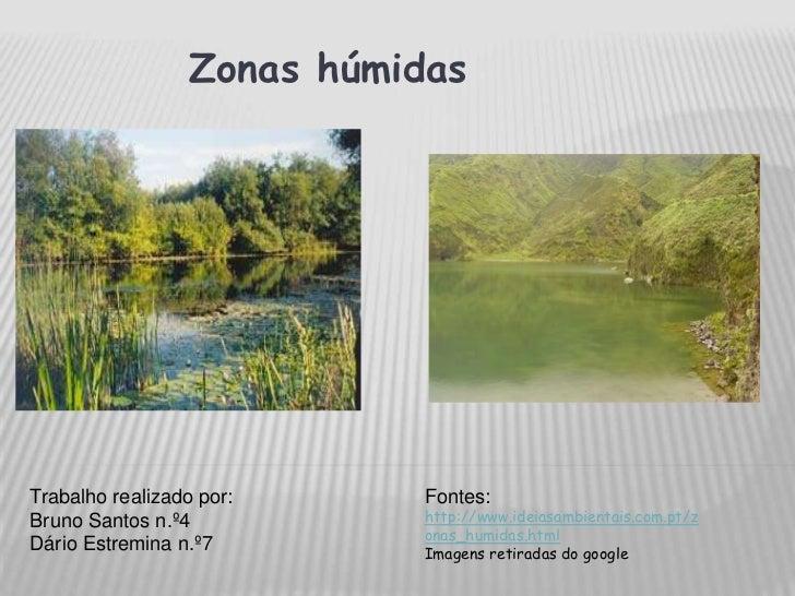 Zonas húmidas<br />Trabalho realizado por:<br />Bruno Santos n.º4<br />Dário Estremina n.º7<br />Fontes:<br />http://www...