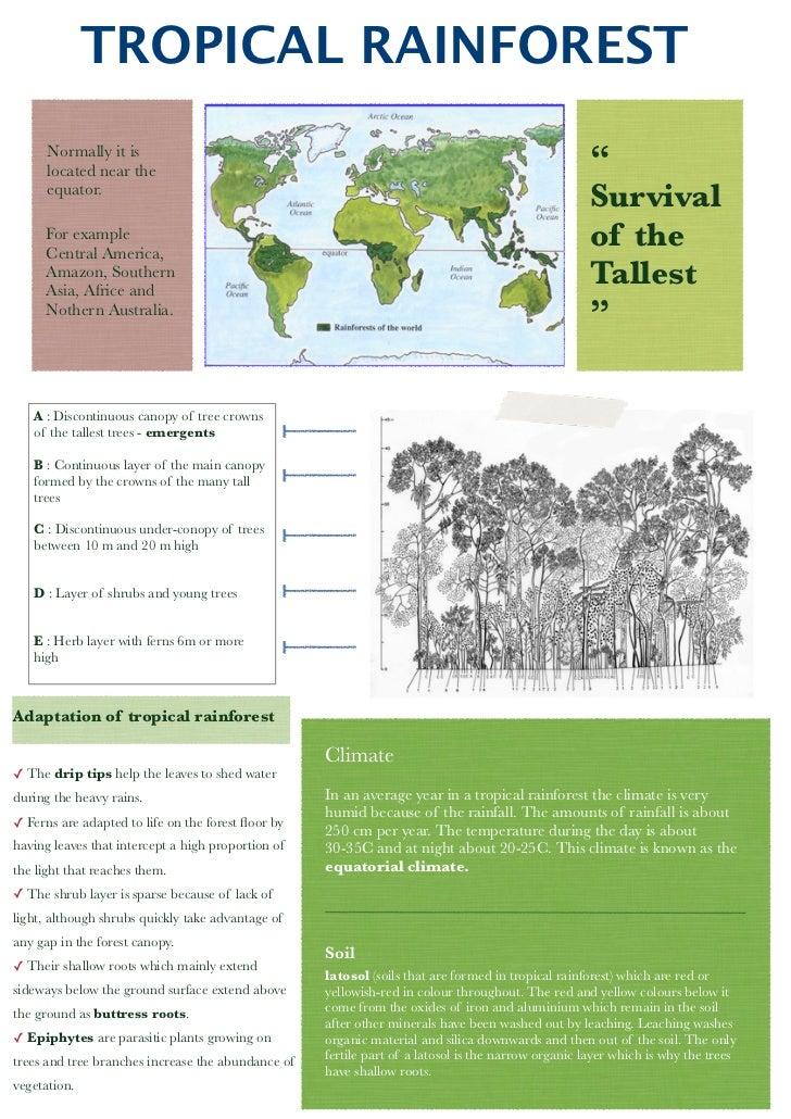 BS tropical rainforest poster