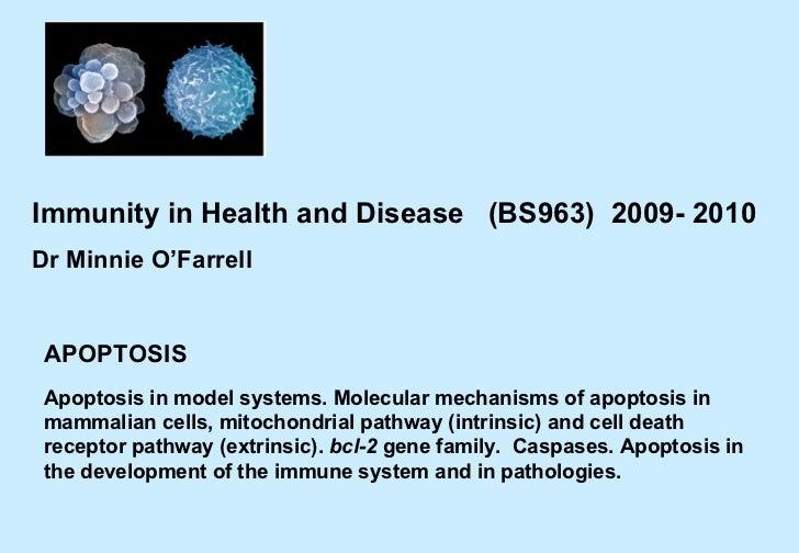 Bs963 apoptosis 09-10