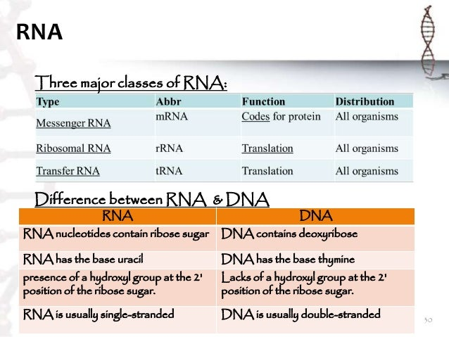 compare and contrast dna and rna One of the most significant similarities between dna and rna is that they both have a phosphate backbone to which the bases attach uracil and thymine serve a similar in form and function with one important difference—the methyl group.
