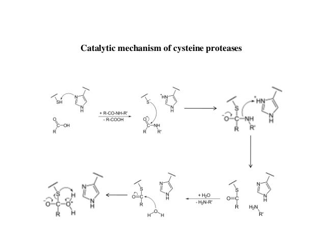 Cysteine Protease Mechanism of Cysteine Proteases