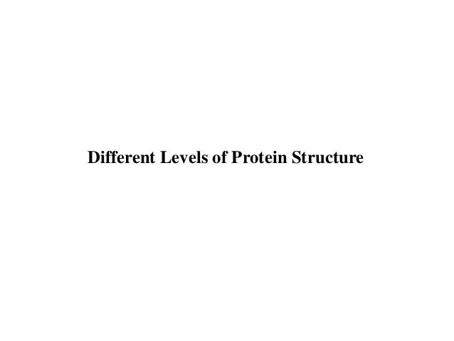 BT631-5-primary_secondary_structures_proteins