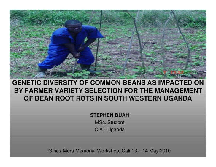 Genetic diversity of common beans as impacted on By farmer variety selection for the management Of bean root rots in south western uganda
