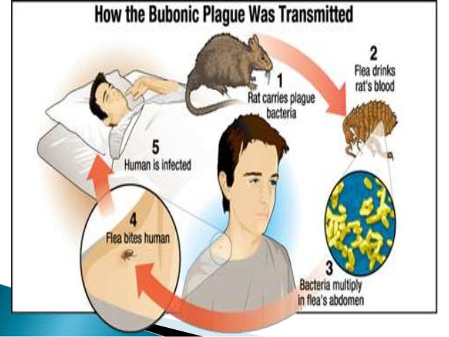 an analysis of the history symptoms cause and mortality of the bubonic plague