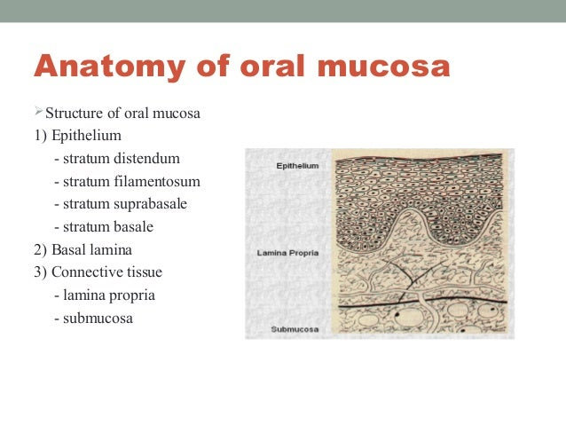 the advantages and limitations of oral route formulations biology essay Oral route   oral refers to two methods of administration: applying   advantages and disadvantages of thetopical route local.
