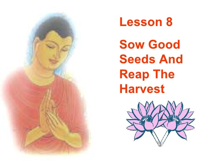 Lesson 8 Sow Good Seeds And Reap The Harvest