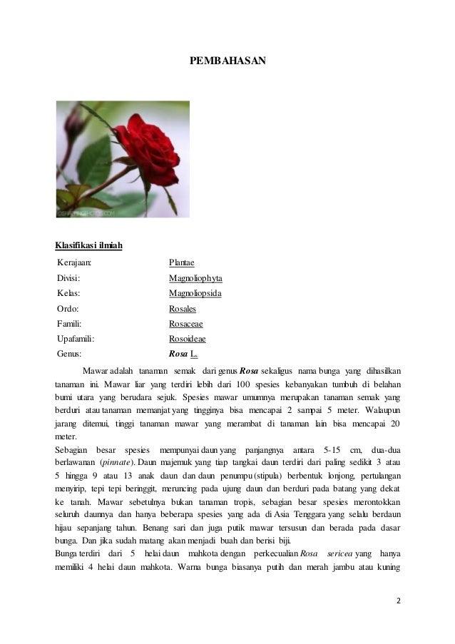 Makalah Bunga Mawar