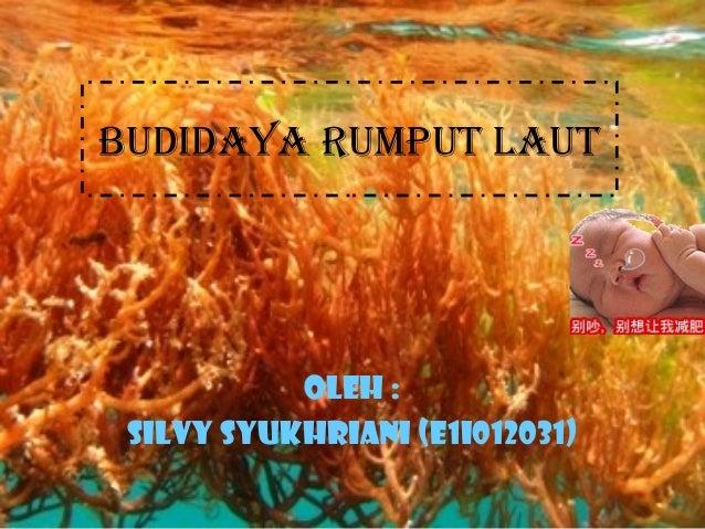 BUDIDAYA RUMPUT LAUT Oleh : Silvy syukhriani (e1i012031)