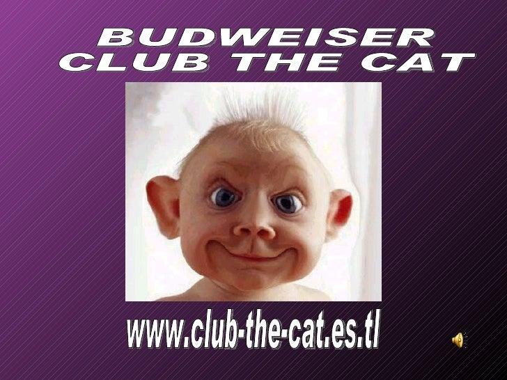 www.club-the-cat.es.tl BUDWEISER CLUB THE CAT