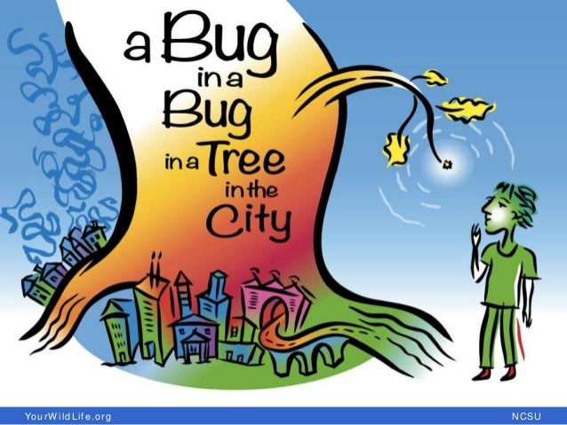 Bug in a bug in a tree in a city