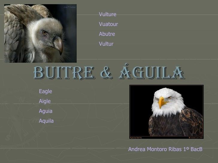 BUITRE & ÁGUILA Eagle Aigle Aguia Aquila Vulture Vuatour Abutre Vultur Andrea Montoro Ribas 1º BacB