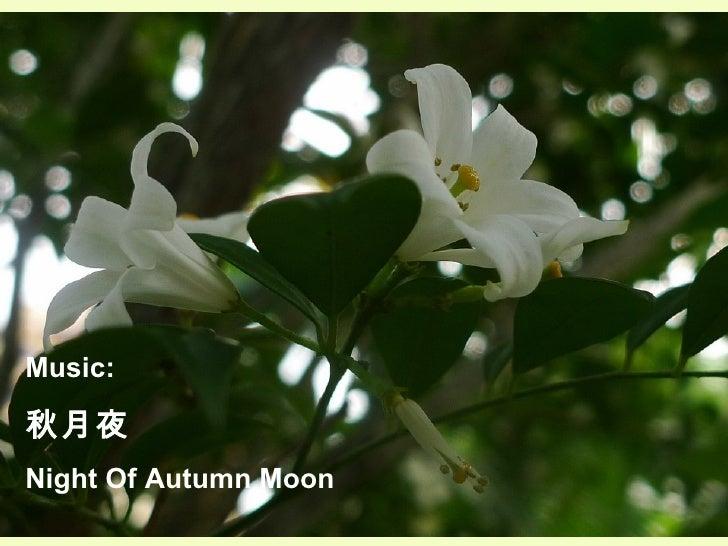 Music:  秋月夜 Night Of Autumn Moon