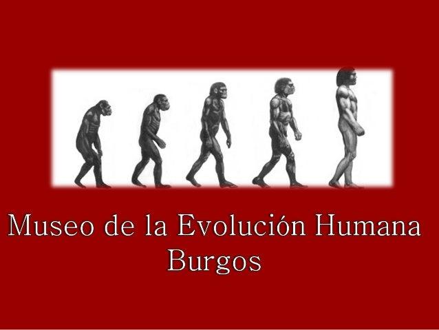 Burgos atapuerca-museo de la evolución humana-2 ernest gold - tema éx…