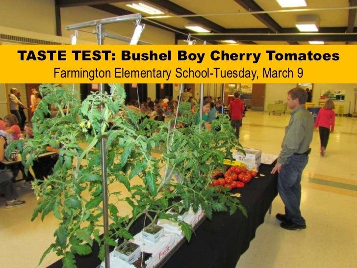 TASTE TEST: Bushel Boy Cherry TomatoesFarmington Elementary School-Tuesday, March 9<br />