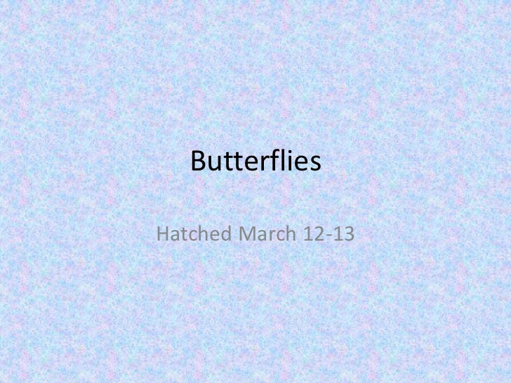 Butterflies<br />Hatched March 12-13<br />