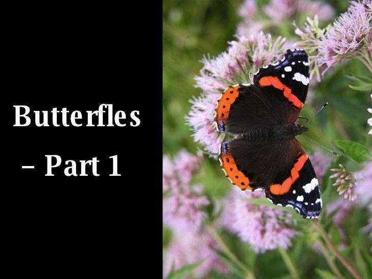 Butterfles –  Part 1