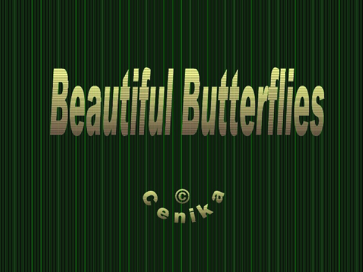 © Cenika Beautiful Butterflies