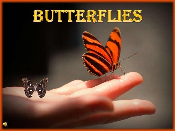 BUTTERFLIES<br />