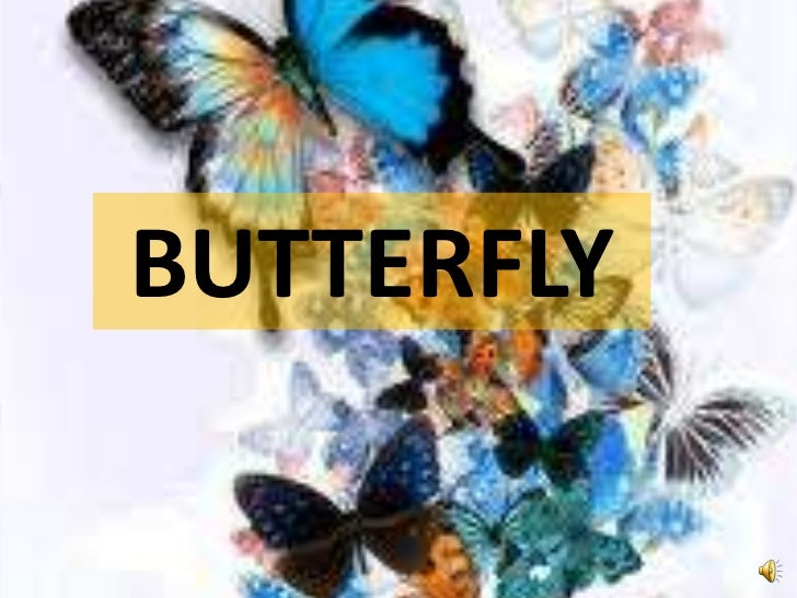 BUTTERFLY<br />