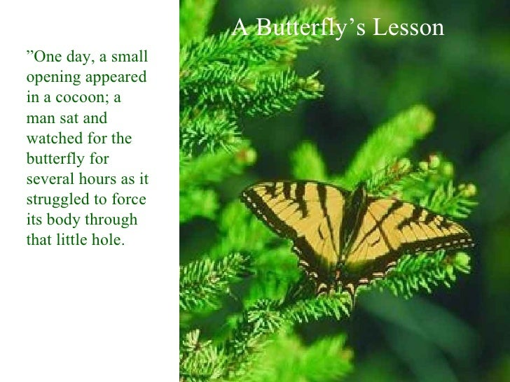 """A Butterfly's Lesson """" One day, a small opening appeared in a cocoon; a man sat and watched for the butterfly for several ..."""