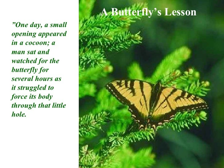 Butterfly Lesson