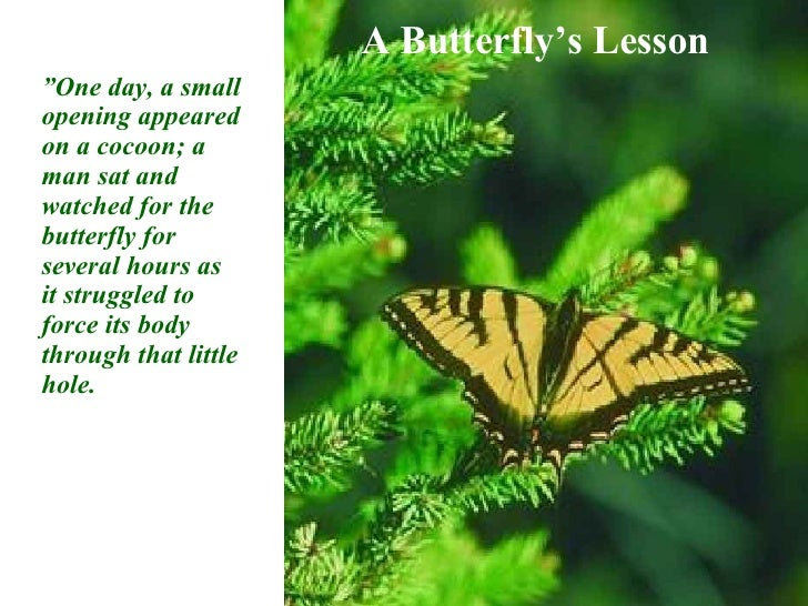 """A Butterfly's Lesson """" One day, a small opening appeared on a cocoon; a man sat and watched for the butterfly for several ..."""
