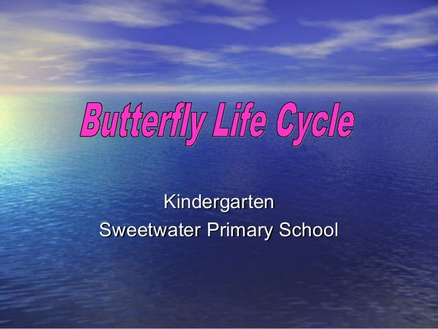 Butterfly life cycle pippin
