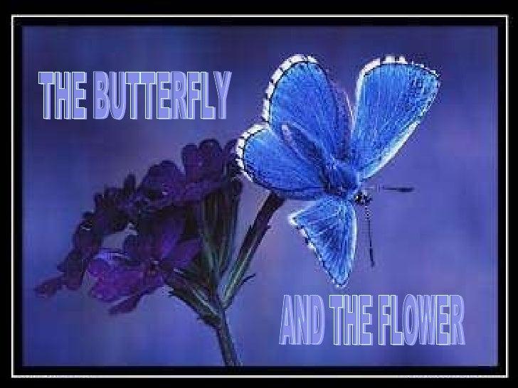 Butterflynflower