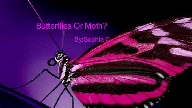 Butterfly or moth!