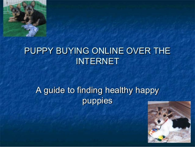 PUPPY BUYING ONLINE OVER THE INTERNET A guide to finding healthy happy puppies