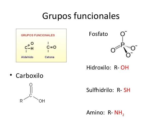 Grupos funcionales • Carboxilo Fosfato Hidroxilo: R- OH Sulfhidrilo: R- SH Amino: R- NH2