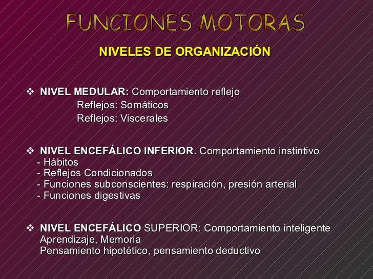FUNCIONES MOTORAS NIVELES DE ORGANIZACIÓN  <ul><li>NIVEL MEDULAR:  Comportamiento reflejo  </li></ul><ul><li>Reflejos: Som...