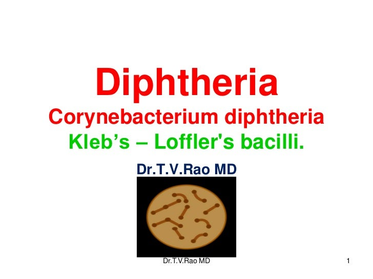 DiphtheriaCorynebacterium diphtheria Kleb's – Lofflers bacilli.        Dr.T.V.Rao MD           Dr.T.V.Rao MD       1