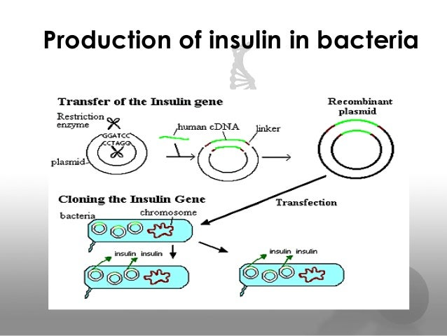 human insulin as a product of biotechnology