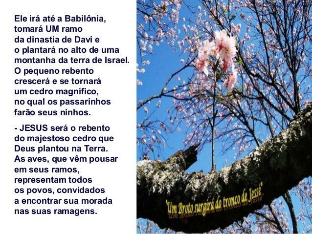 Na 2ª Leitura, Paulo, no final de sua vida, cansado pelos anos e pelas provações, deseja repousar para sempre com Deus e c...