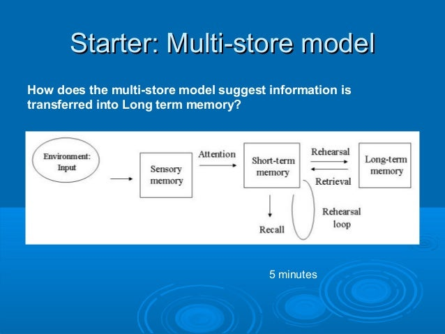 Starter: Multi-store modelStarter: Multi-store model How does the multi-store model suggest information is transferred int...